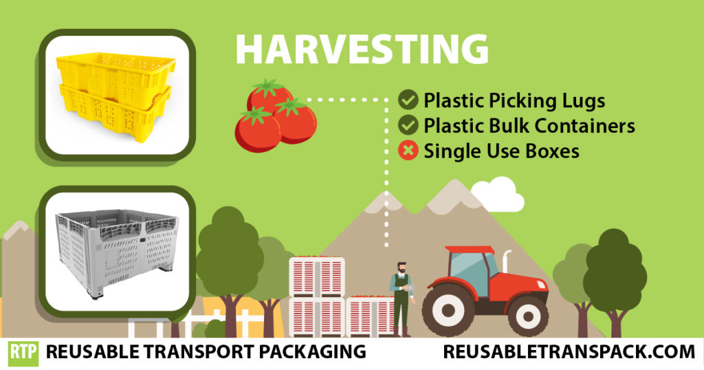 Plastic Pallets and Bulk Containers used for fresh produce harvesting